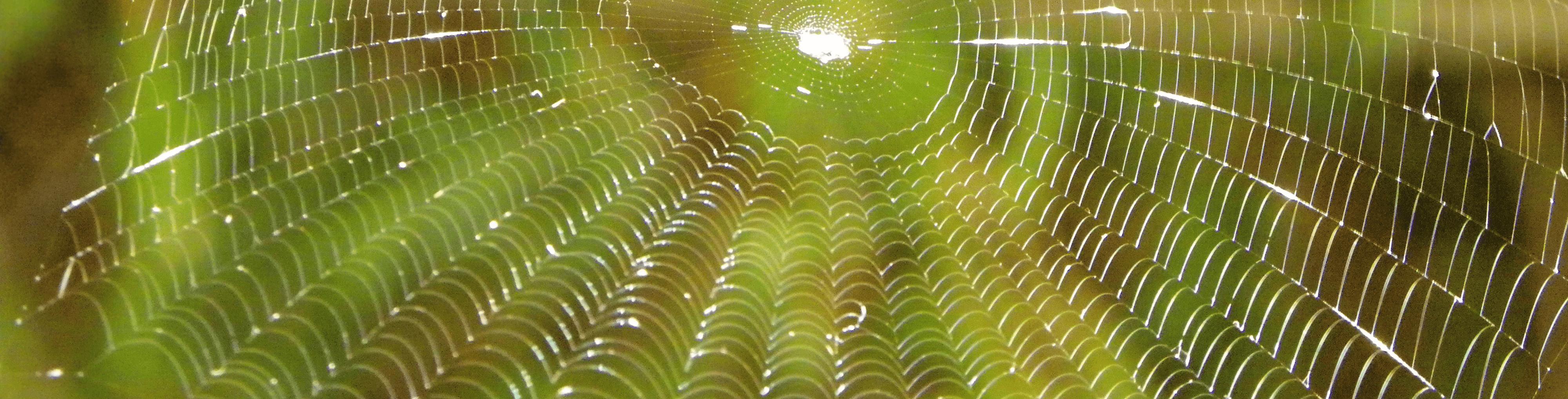 Autumn Web By Tom Hanlon